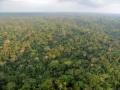 1. Amazonský deštný les, peneplén (parovina), Ucayali, Peru (JL).