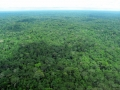 2. Amazonský deštný les, peneplén (parovina), Ucayali, Peru (JL).
