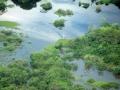 10. Amazonský deštný les, peneplén (parovina), Ucayali, Peru (JL).