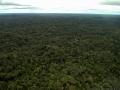 11. Amazonský deštný les, peneplén (parovina), Ucayali, Peru (LH).