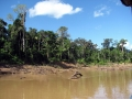 9. Galeriový les na erodovaném břehu řeky Yuruá, Ucayali, Peru (JL).