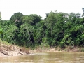 9. Les na erodovaném nárazovém břehu řeky Yuruá; Ucayali, Peru (JL).