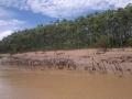 10. Písčitá pláž s Anakondou, v pozadí primární sukcese na nově uložené říční naplavenině nánosového břehu; řeka Yuruá, Ucayali, Peru (AR).