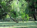 2. Záplavový les; jezero Yarinacocha, Ucayali, Peru (JL).