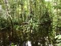 3. Interiér záplavového lesa; Národní rezervace Pacaya - Samiria, poblíž Lagunas Loreto, Peru (LB).
