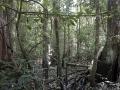 5. Interiér záplavového lesa; řeka Yanayacu - Pucate, Národní rezervace Pacaya - Samiria, Loreto, Peru (AR).