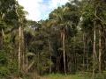 1. Profil nížinného lesa; poblíž vesnice Breu, Ucayali, Peru (LH).