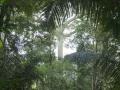 3. Interiér nížinného lesa; experimentální les Macuya Národní Univerzity v Ucayali – Universidad Nacional de Ucayali, Peru (HD).