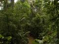 5. Interiér primárního nížinného lesa; poblíž vesnice Breu, Ucayali, Peru (LH).