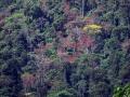 2. Horský les; Národní park Tingo María, Huanuco, Peru (JL).