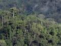 3. Horský les; Národní park Tingo María, Huanuco, Peru (DH).
