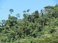 4. Horský les; Národní park Tingo María, Huanuco, Peru (JL).