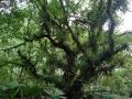 5. Strom obrostlý přisedavými rostlinami (HV).