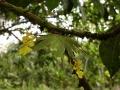 7. Přisedavá rostlina – epifyt (LB).