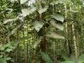 9. Přisedavá rostlina – epifyt (LB).