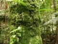 13. Epifytický mech na borce stromu (LB).