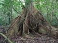 1. Pilířovité kořeny (pilíře), (JL).