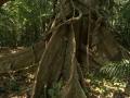 2. Pilířovité kořeny (pilíře), (LH).