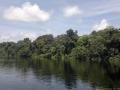 Záplavový les, řeka Pacaya, Národní rezervace Pacaya - Samiria, Loreto, Peru