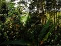 3. Agrolesnické pěstování druhů: Calycophyllum spruceanum (Benth.) Hook.f. ex K.Schum, šp. Capirona; guazuma, Guazuma crinita Mart., šp. Bolaina; inga jedlá, Inga edulis Mart., šp. Guaba; kakaovník pravý, Theobroma cacao L., šp. Cacao; mangovník, Mangifera L.; a moukeň ztepilá, Bactris gasipaes Kunth., angl. Peach palm, šp. Pijuayo; pokusné plantáže Světového agrolesnického centra – World Agroforestry Centre; poblíž vesnice San Alejandro, Ucayali, Peru (LH).