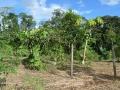 5. Agrolesnická parcela, vesnice Nueva Victoria (Asháninca) na řece Yuruá, Ucayali, Peru (HV).