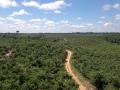 6. Projekt znovuzalesňování cennými dřevinami pomocí agrolesnických technik využívajících druh inga jedlá, Inga edulis Mart., bobovité (Fabaceae), angl. Ice-cream-bean, šp. Guaba; Tento průkopnický (pionýrský) druh díky své odolnosti k přímému slunečnímu záření v lese jako první osidluje nově vzniklé pralesní světliny. Díky této vlastnosti velice rychle dokáže poskytnout prvotní vegetační pokryv a tudíž stín a mulč semenáčkům cenných druhů dřevin, které tuto schopnost nemají; vesnice Tournavista, Ucayali, Peru (AR).