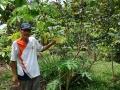 8. Zemědělec Leonel a zástupce rodu lilek, Solanum stramoniifolium Jacq, lilkovité (Solanaceae) šp. coconilla; vesnice Zungarococha, Loreto, Peru (LB).