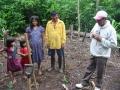 """15. Jednou ze součástí agrolesnictví je i podsadba původního lesa dřevařsky nebo jinak cennými autochtoními druhy (tzv. obohacovací výsadba). Při ní jsou, ať už ve školkách vypěstované sazenice, nebo náletoví jedinci (""""wildlings"""") vysazovány do úzkých pruhů vzrostlého lesa, které byly předem vyčištěny od menších stromů v podrostu a částečně prosvětleny odstraněním některých jedinců vrchního stromového patra (WS)."""
