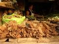 """3. Prodej lýka popínavé dřevité liány Unkárie (řemdihák plstnatý, """"kočičí dráp""""), Uncaria tomentosa (Willd. ex Schult.) DC., mořenovité (Rubiaceae), angl. Cat´s claw, šp. Vilcacora, Uña de gato, na trhu Bellavista ve městě Pucallpa, Ucayali, Peru (LB)."""