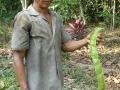 13. Zaměstnanec etnobotanické zahrady - Jardin etnobotanico, ukazuje plod Ingy, Inga sp. Bobovité (Fabaceae), šp. Shimbillo; km 19,8, Ucayali, Peru (LB).