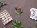 15. Zpracování rostlinného materiálu - herbářových položek, experimentální les Macuya Národní Univerzity v Ucayali – Universidad Nacional de Ucayali, Ucayali, Perú (HV).