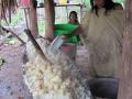 Příprava tradičního masata, vesnice Shoniro, Yuruá, Ucayali, Perú JL