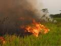 1. Žďáření již odlesněného území poblíž vesnice Antonio Raimondi, Ucayali, Peru (LB).