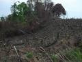 3. Odlesněná plocha, rezervace El Sira, Huánuco, Peru (HV).