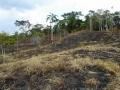 4. Odlesněné území poblíž vesnice Nuevo Belén, Ucayali, Peru (LB).