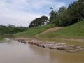 4. Plavení dřeva na řece Utiquinia, Ucayali, Peru (AR).
