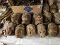 2. Sušené opičí hlavy na trhu Belén ve městě Iquitos, Loreto, Peru (LB).