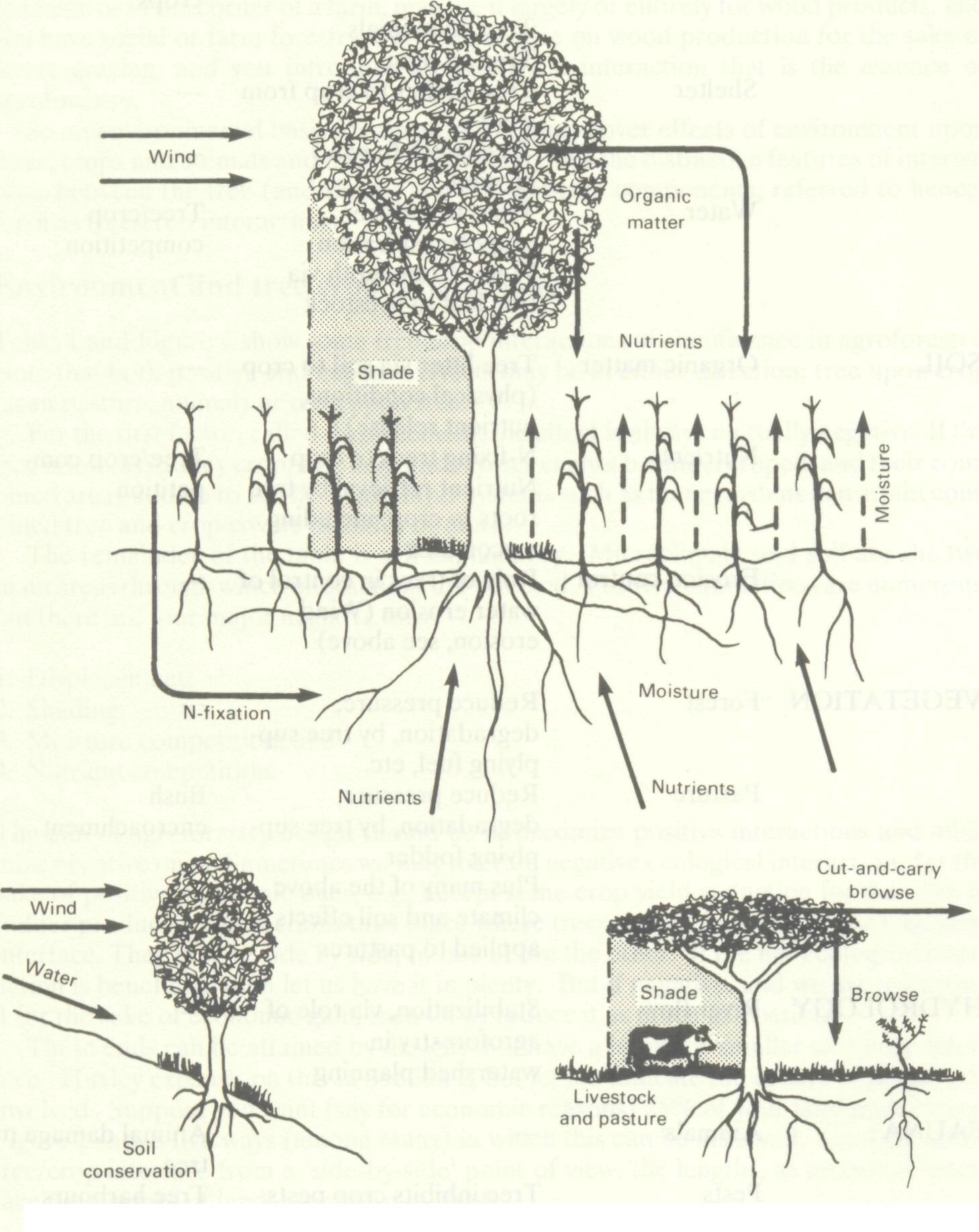 environmental_basis_agroforestry_2